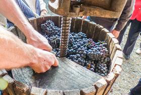 Parking Musée de la Vigne & du Vin d'Anjou à Angers : tarifs et abonnements - Parking de musée | Onepark